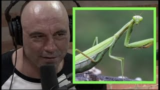 Joe Rogan | What If Bugs Were Big and Intelligent? w/Josh Homme