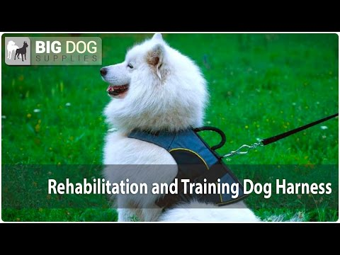 Ultra Lightweight Nylon Dog Rehabilitation Harness on Samoyed