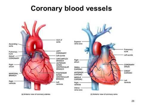 PHA10014 Cardiovascular system pathology 2015 2016
