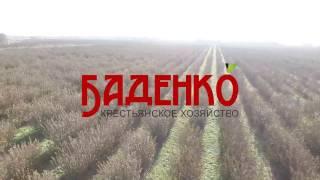 КХ Баденко(, 2017-01-13T11:55:46.000Z)