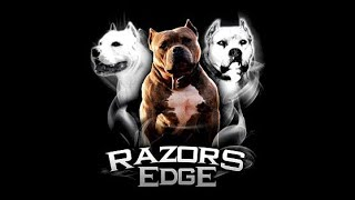 THE HISTORY OF THE RAZORS EDGE PIT BULL  AMERICAN BULLY BLOODLINE