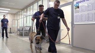 Спасение сбитой собаки