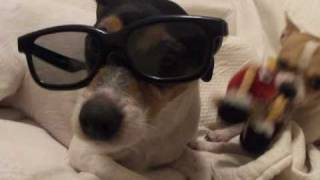 Diesel the Jack Russell wearing 3D glasses(Diesel thought it would be cool to try on those 3D glasses to appear incognito in the bedroom... But I found him anyways. Oh, silly Diesel! There's also Duke the ..., 2011-02-16T07:35:10.000Z)
