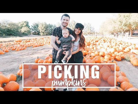 Pumpkin Patch, Grocery Haul, Birthday Party