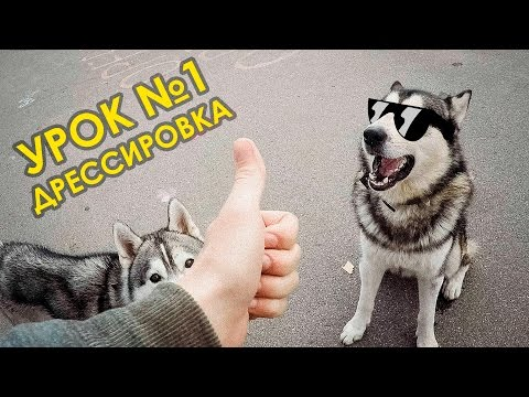 Дрессировка собак урок первый/ Dogs training. Lesson 1