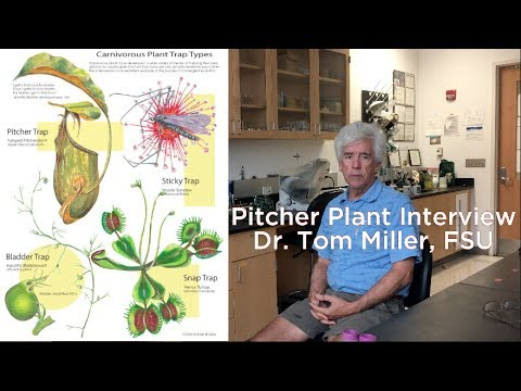Pitcher Plants: Dr. Thomas Miller, FSU: Full interview