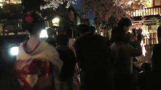 京都・祇園白川の夜桜の下で偶然遭遇した舞妓さんたち Maiko under cherry blossoms at Gion-Shirakawa (river), Kyoto
