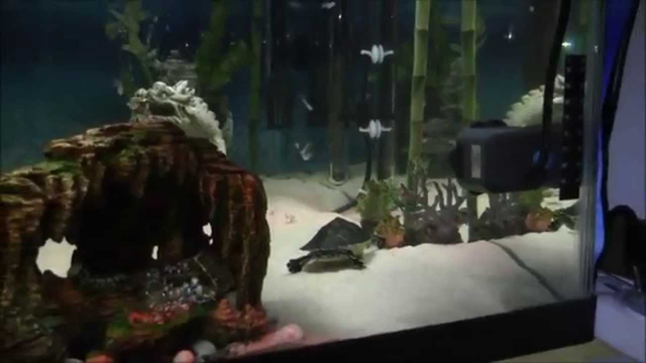 how to make a indoor turtle pond