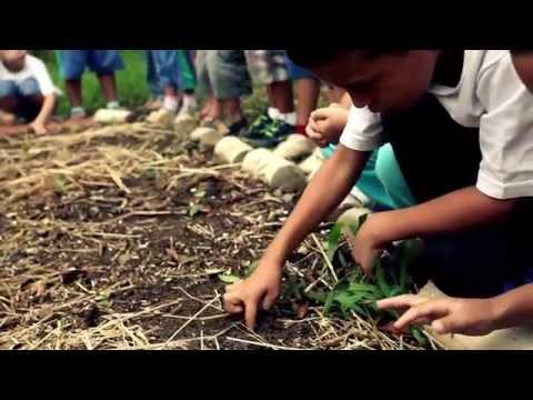 agricultura-urbana-e-periurbana-em-são-paulo---episódio-3