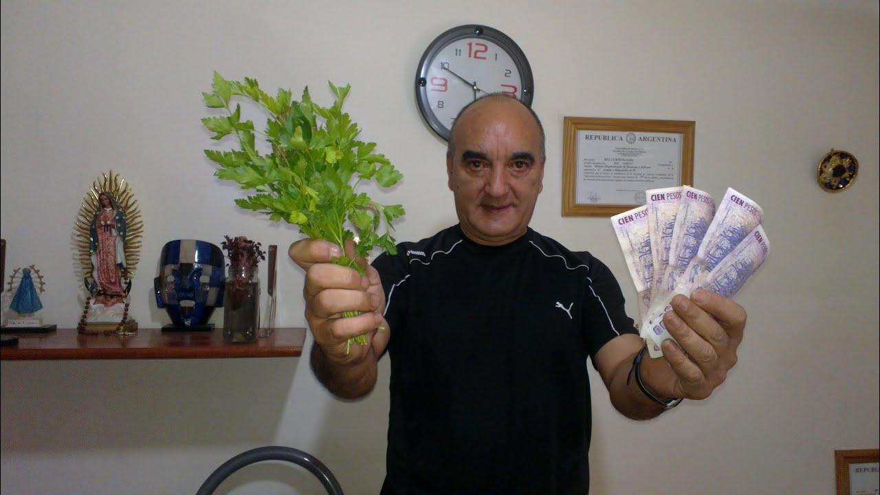 Baño Plantas Amargas:Oracion Para Atraer El Dinero