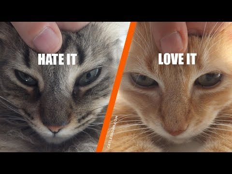 What's Your Cat's Petting Style?
