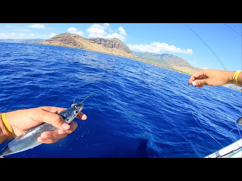 Live Bait Fishing In Hawaii And Some Reef Fishing