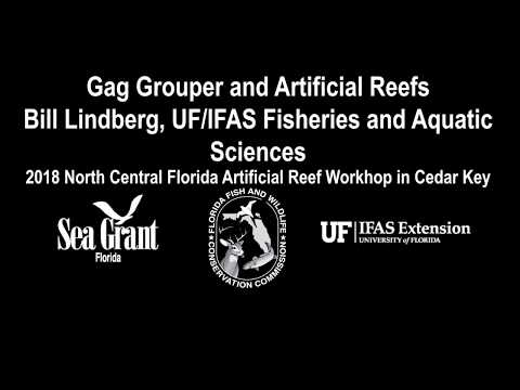 Gag Grouper and Artificial Reefs: 2018 North Central Florida Artificial Reef Meeting