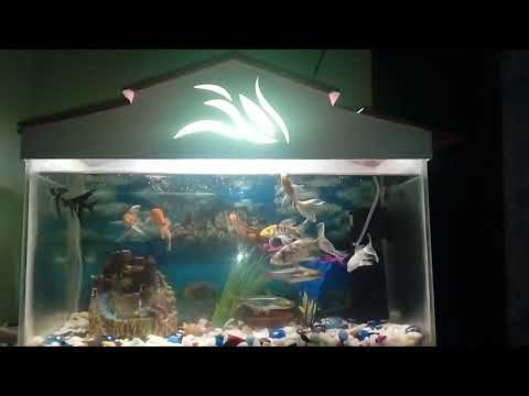 Trichy Jai - Fish Tank Update