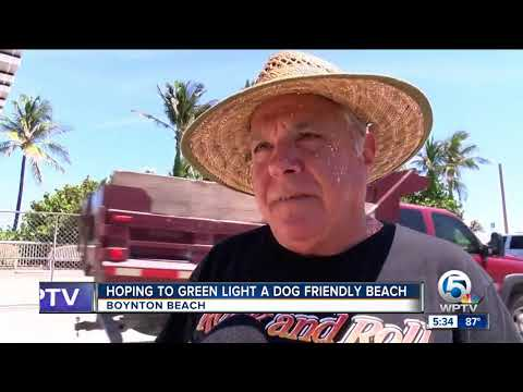 Boynton Beach To Discuss Day At The Beach For Dogs