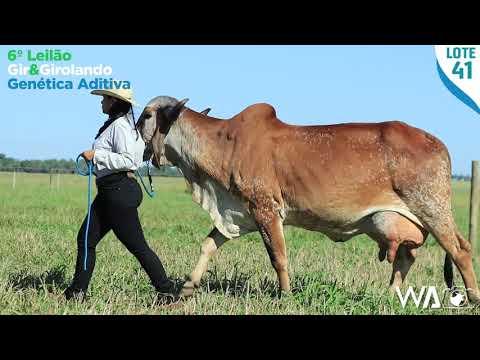 LOTE 41 - LLSE 123 - 6º Leilão Gir & Girolando Genética Aditiva