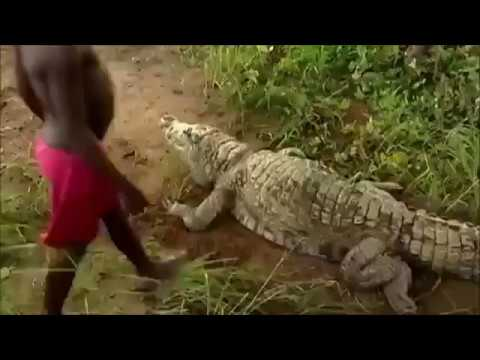 Pet crocodile - share if you enjoyed your childhood growing up in Africa