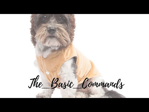 how-to-train-dog-the-basics-in-brain-training-for-dogs