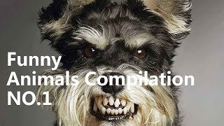 Crazy pets - Funny Animals Compilation NO.1 - Dog Fight against Sweeping Robot