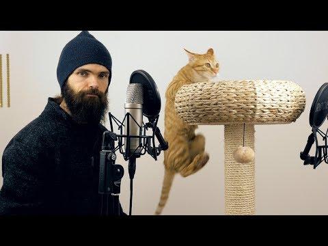 日本語ASMR:キャットタワーで猫たちと良い音を作ってみた