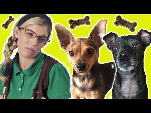 Dog sitting FAIL w/ Beatrice Mumblesteen