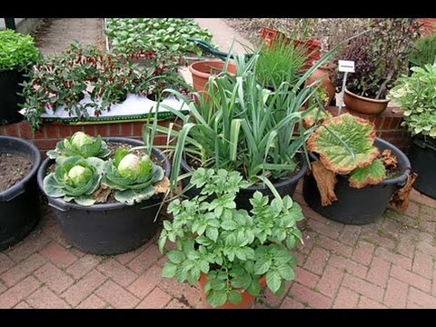 best vegetables  grow in containers || गमलों में सब्जियां उगाना