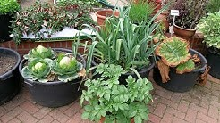 Best Vegetables Grow in Containers ||