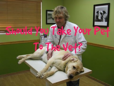 When To Treat Your Pet At Home, When To See The Vet