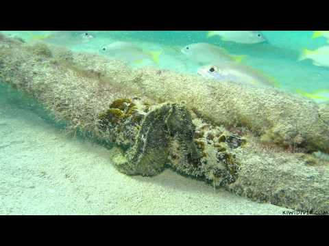 Scuba diving Phuket's local beaches – Kata Beach
