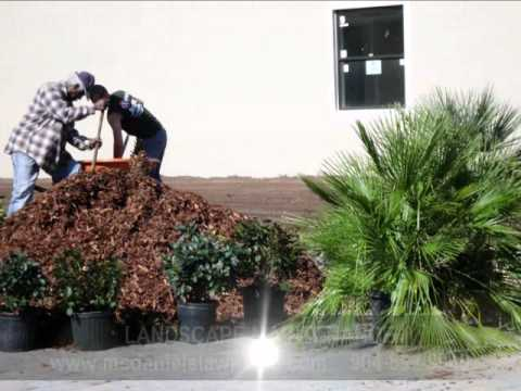 McDaniel's Lawn Care & Landscaping Jacksonville Beach FL