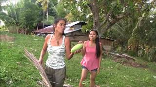 BEAUTIFUL FILIPINA HARVESTING MANGO SIMPLE LIFE IN THE PROVINCE
