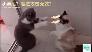 Những pha hài hước bá đạo của động vật (TikTok) - Đi Bụi Vlogs