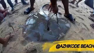 Catching Stingray at Kerala Azhikode Beach- GoPro