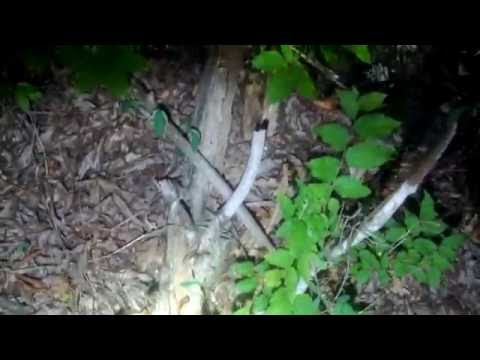 Sasquatch Night Investigation In Active Shelter Area Where The Footsteps Were BIGFOOT 2016 #66