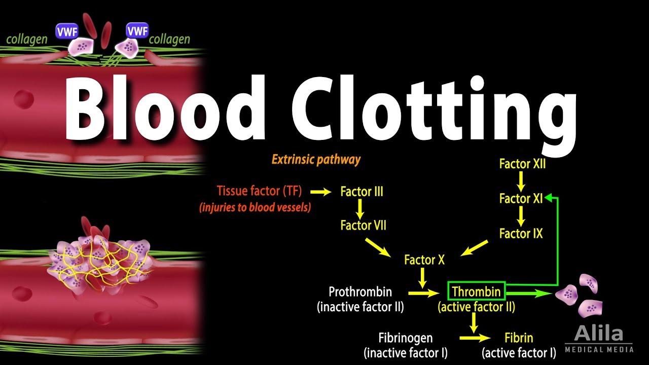 Coagulation in Living Tissue VI