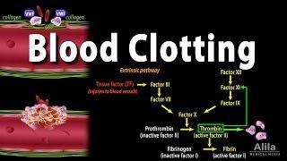 Hemostasis: Control of Bleeding, Coagulation and Thrombosis, Animation