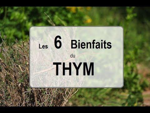 Thym citronné vertus
