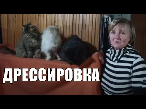 Дрессировка кошек в домашних условиях / Cat training at home