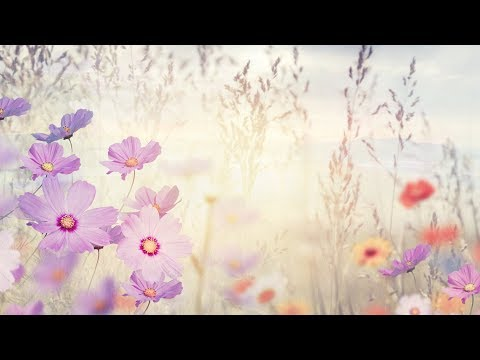 """Peaceful music, Relaxing music, Instrumental Music """"Summer Light"""" by Tim Janis"""