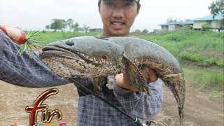 Repeat youtube video FIN frog # กบ FIN ถล่มปลาช่อนยักษ(ข้างทาง)