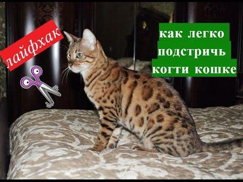 Как подстричь коту когти если он сопротивляется