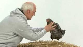 Colin Mochrie Gives a Pep Talk to a Chicken   World Vision
