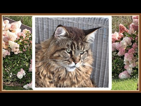 Willy the Cat, Irina and the autumn flowers
