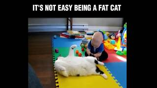 Funny Cat and Dog Videos Compilation #5 - PAWZ Road
