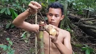 MEMBUAT PONDOK BERBURU Ditepi Sungai Hutan Bagian 1 Primitive Technology Indonesia