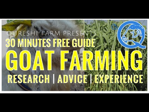 Goat Farming Full Guide 30 Minutes - Research, Expert Advice