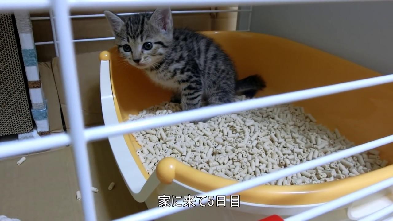 方 子猫 初めて 飼い
