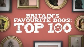Britain's Top 100 Dogs Live 2019 - VOTE NOW
