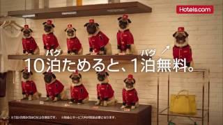Hotels.com 面白いCM かわいいパグ犬 10パグためると1パグ無料 面白い、...