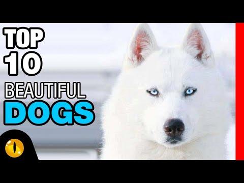TOP 10 BEAUTIFUL DOG BREEDS